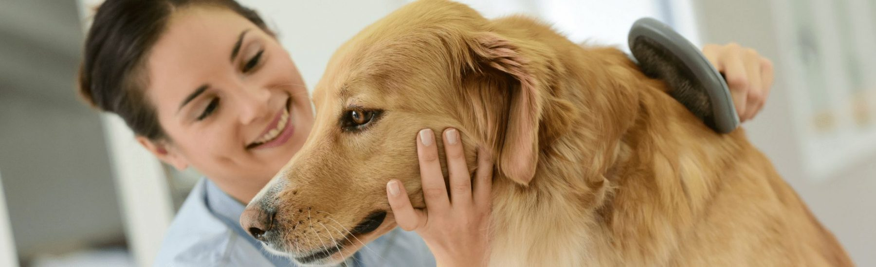 A dog being groomed with a brush