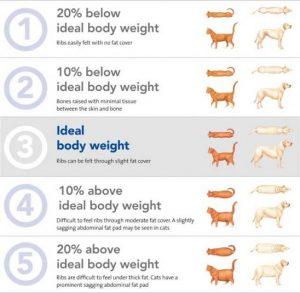 Body Score Dog Chart