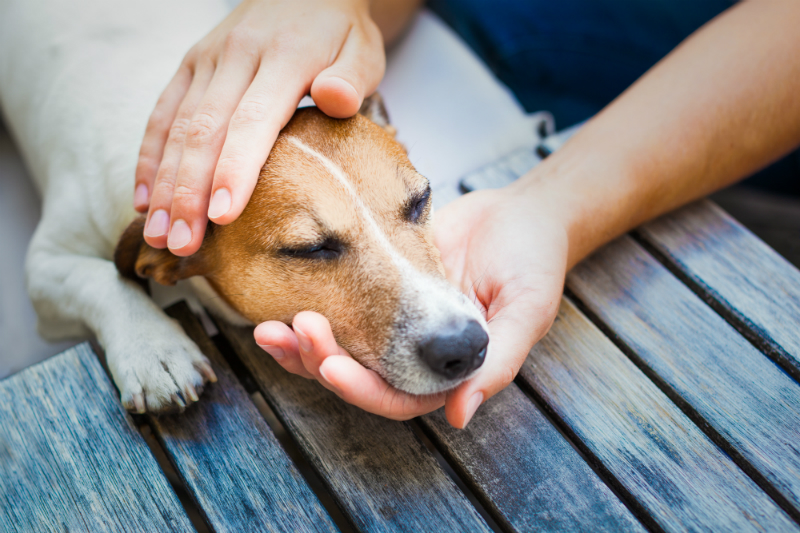 Dog lying with his head on a human's hand