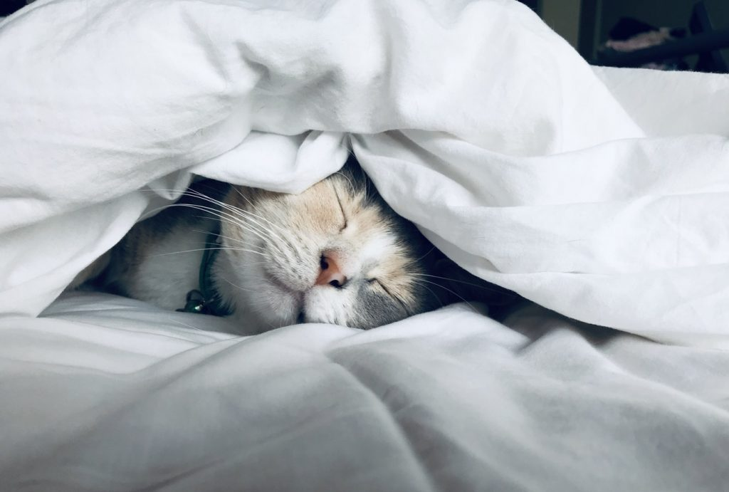 Cat relaxed in bed