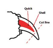 nail trim guide